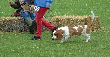 Wanborough Show Companion Dog Show, Things to do Swindon, Wanborough Show